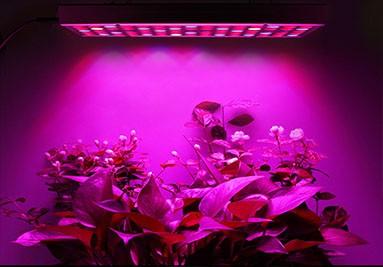 Bitki Yetiştirme Lambası